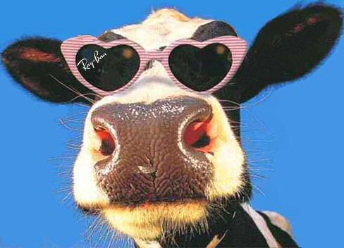 diageo baileys cow